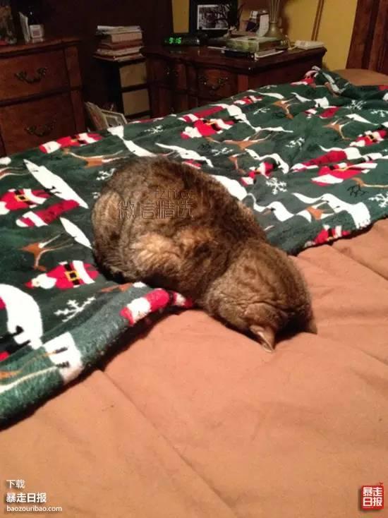 杂谈丨不能睡懒觉的人都是这样的,感觉心好累~