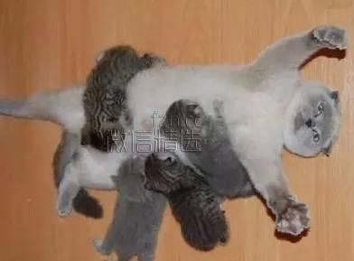 图:原来奶孩子的猫妈,是这样一脸的生无可恋