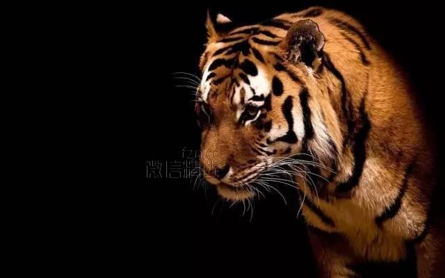 一只饥饿的老虎(发人深省)