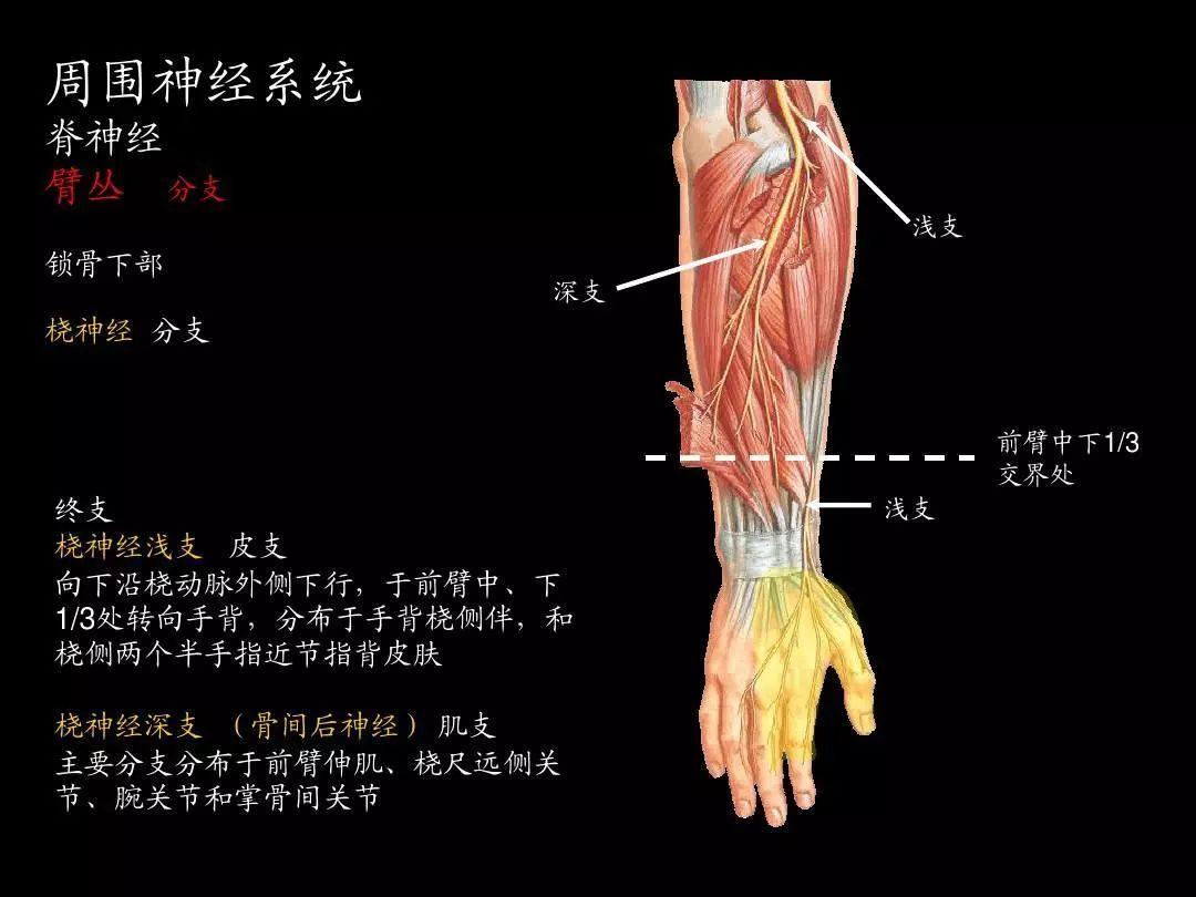 北京协和医院这套神操火了,4个动作让大脑反应更快-小苏-每日微信精选