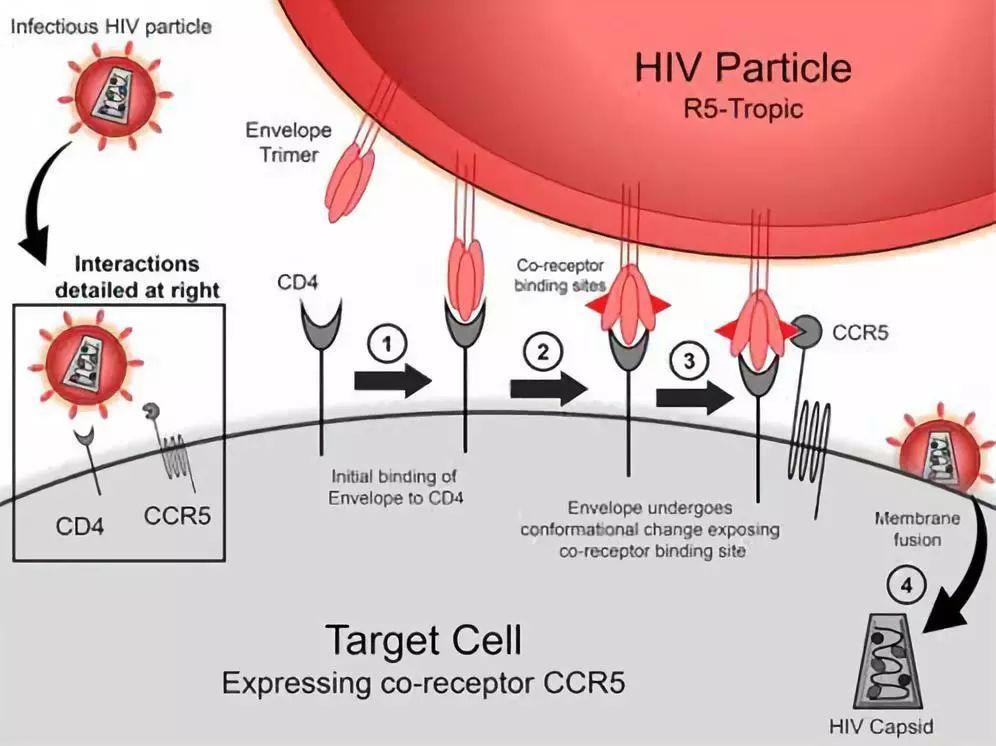 腾讯科技:第二例艾滋病被治愈或将诞生 患者已停药一年多
