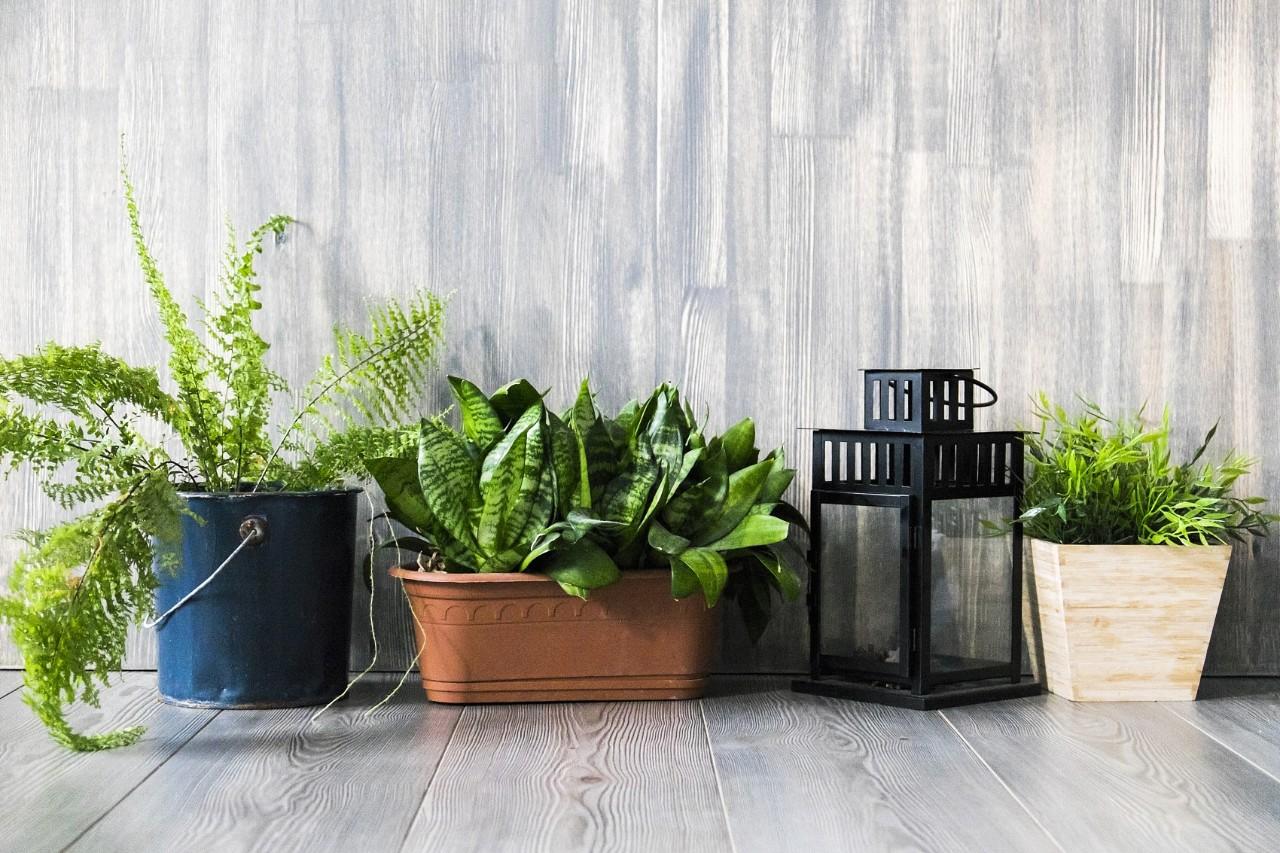 这些绿植真能吸甲醛!通过植物去除甲醛只是一种心理安慰。更有用的是…