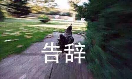 论一只鹅的战斗力有多强,击败它的方法竟然是……