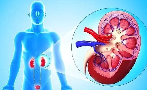 为什么得尿毒症的人越来越多?这3个习惯你可能也有