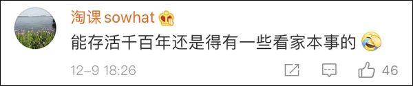 """地震来临大熊猫扔下竹子""""瞬间上树"""",极强""""求生欲""""惊呆网友。-小苏-每日微信精选"""