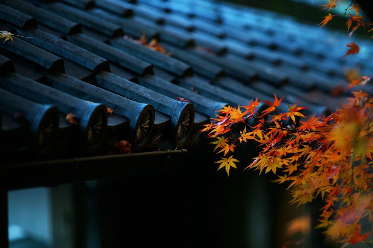 白露:一场秋雨一场寒-小苏-每日微信精选