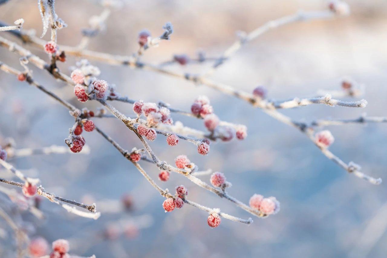 深度好文:霜降,恍然暮秋至,静候冬日来