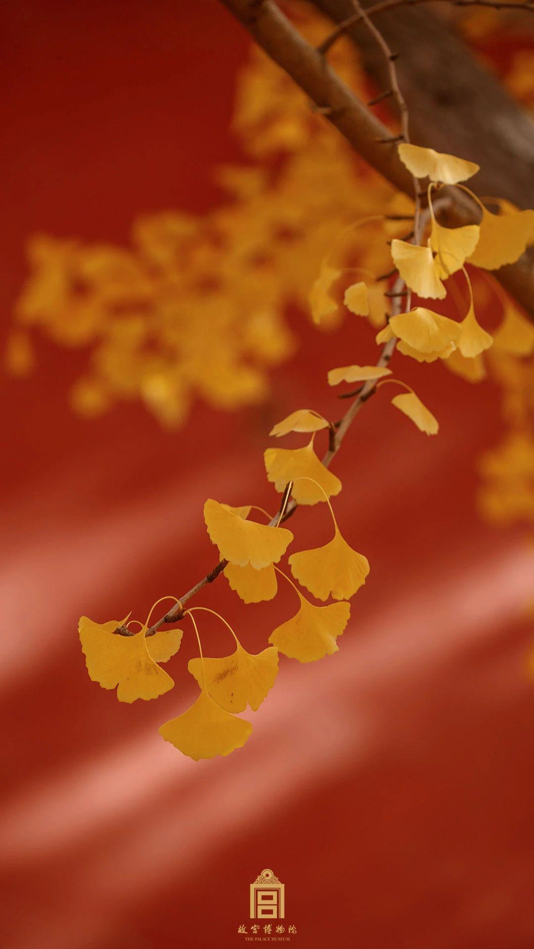 """""""年年陌上生秋草 日日楼中到夕阳"""" 故宫的秋天,请慢一点-小苏-每日微信精选"""