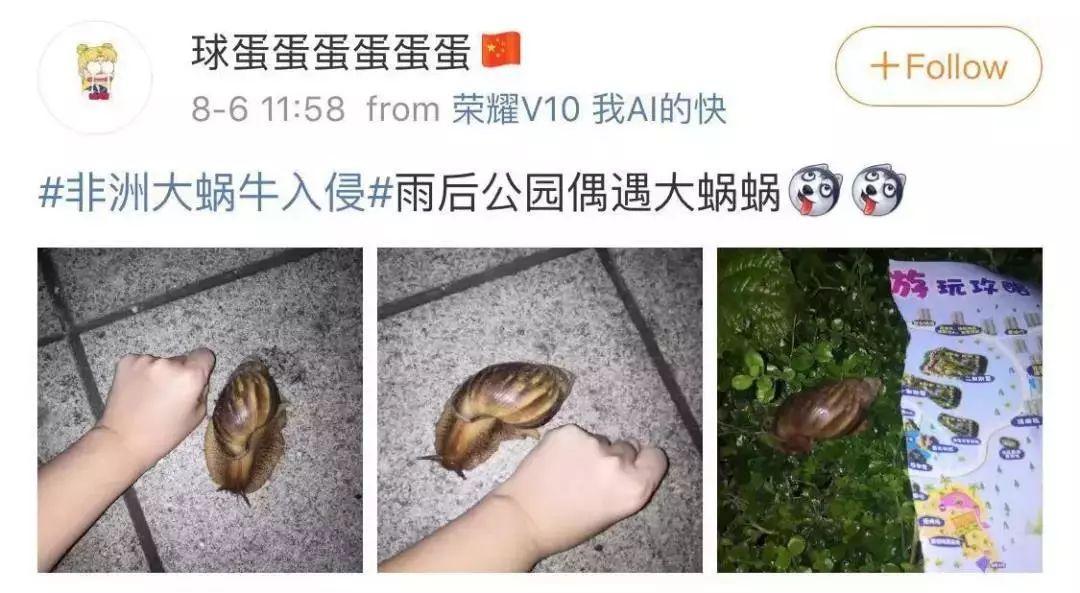 健康时报:大雨过后遍地爬的这种大蜗牛千万别碰,有人摸了后发烧到40度!